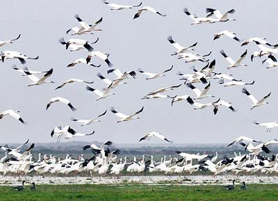 Bharatpur Bird Sanctuary With Fatehpur Sikri Tour Package