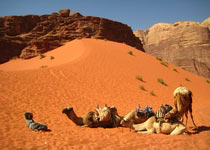 Jordan Camel Trekking Tour