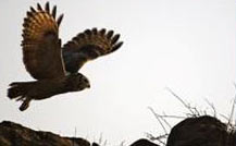 Gujarat Wildlife & Birding Tour