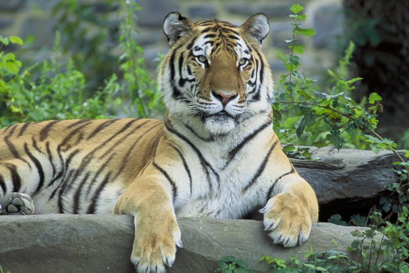 Taj Ganges And Tiger Tour