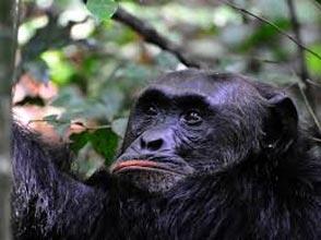 Murchison Falls National Park & Kibale Tour