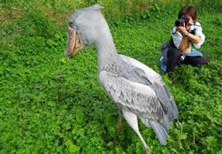 Birdwatching In Kampala And Lake Mburo National Park - 7 Days Trip Tour