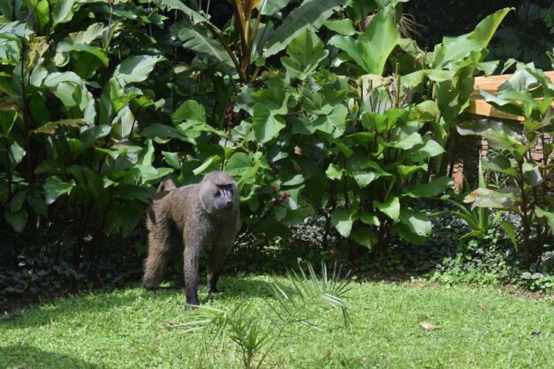 Uganda And Rwanda Gorilla Tracking Tour
