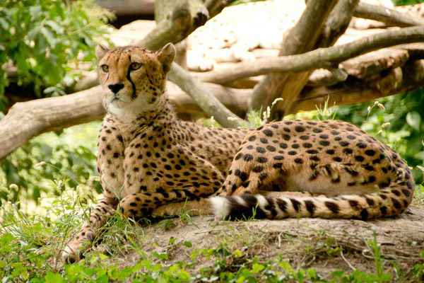 Uganda Wildlife/ Game Viewing Safari Tour