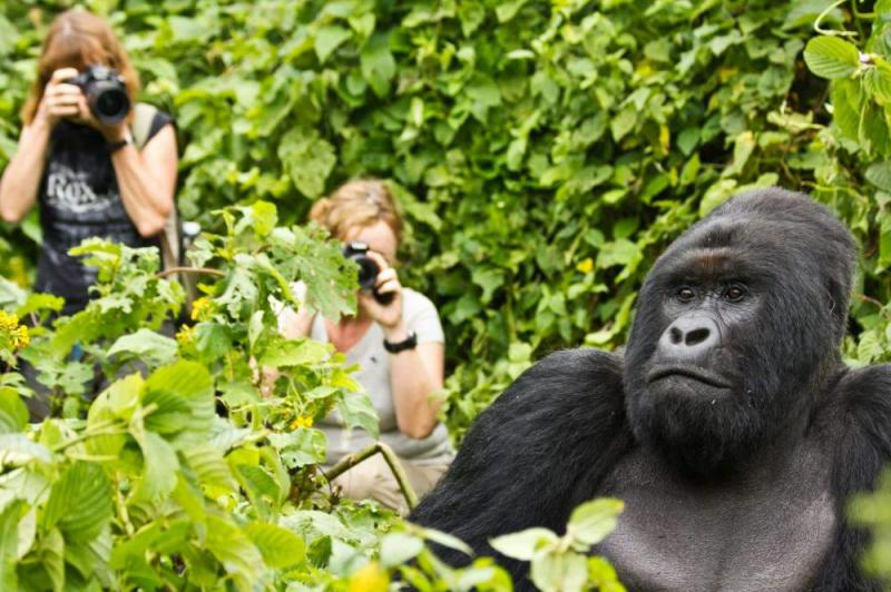 Gorilla Safari Uganda And Rwanda Tour
