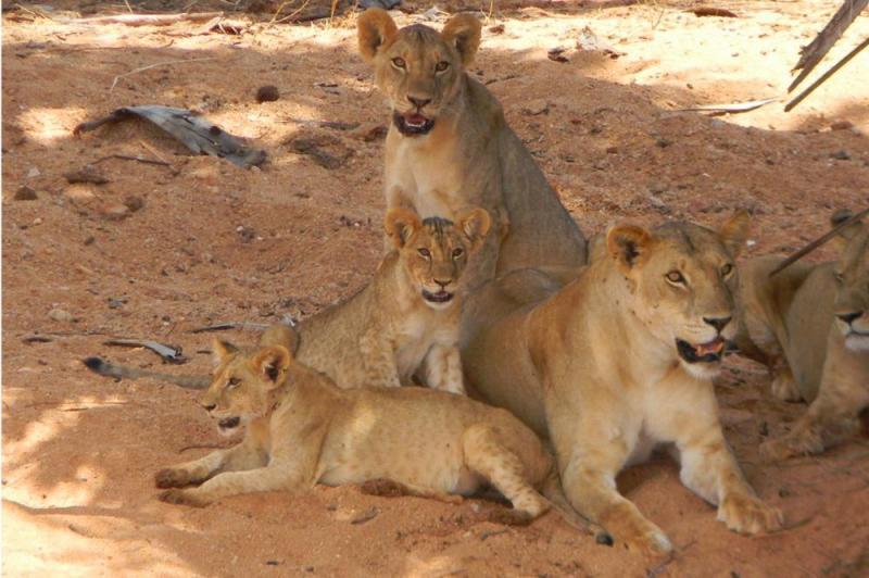 1 Day Tsavo East Safari Package