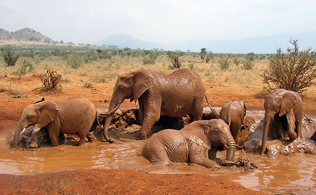2 Days Tsavo East Tour Package