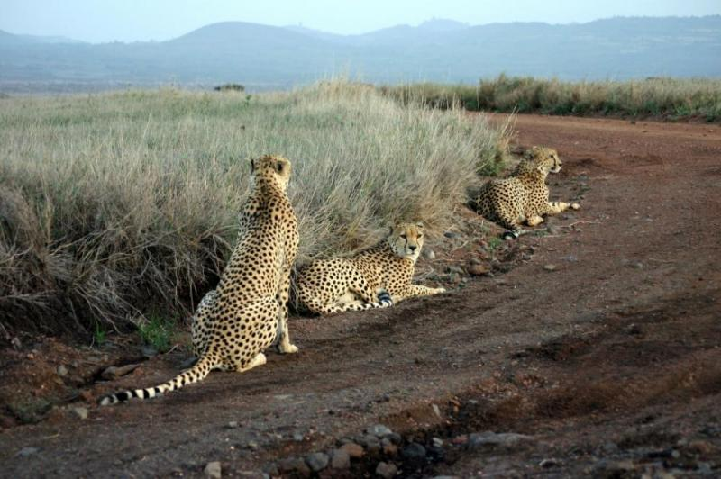 2 Days Tsavo East Tour & West Package