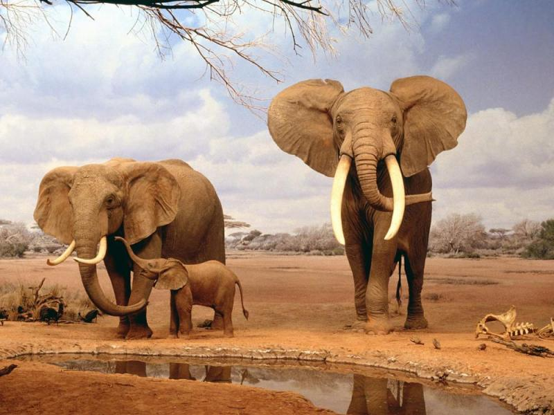 3 Days Tsavo East & Amboseli Package