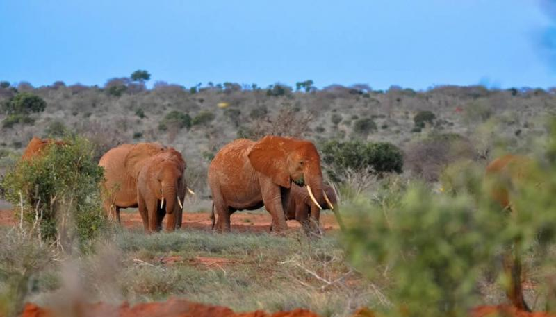 3 Days Tsavo East/ West Package