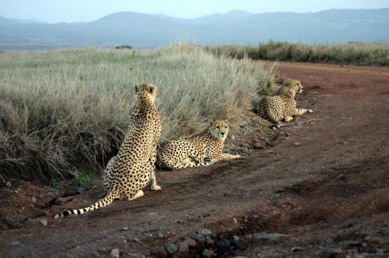 4 Days Tsavo East, Tsavo West & Amboseli Package