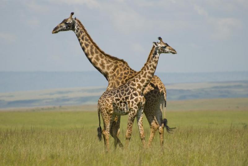 6 Days Masai Mara, Lake Naivasha, Amboseli, Mombasa By SGR Train Package