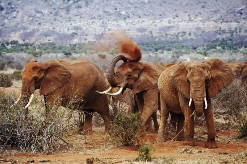 Amboseli, Tsavo East Mombasa Package