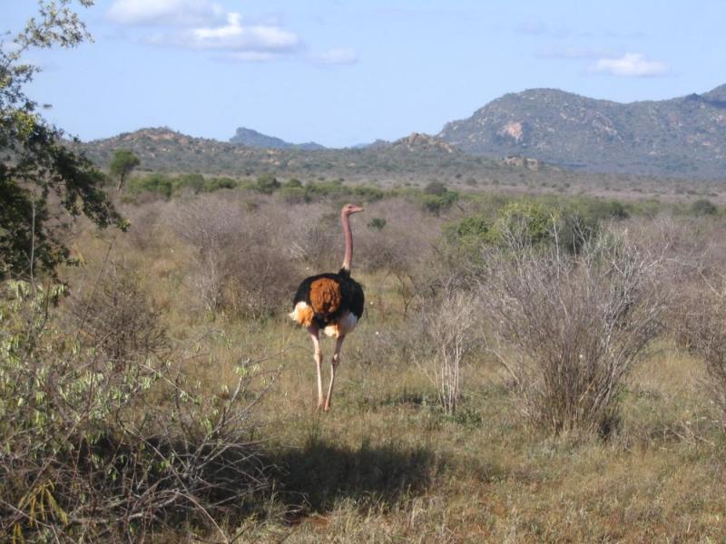 7 Days Mombasa, Tsavo East, Tsavo West, Amboseli, Lake Naivasha & Masai Mara Package