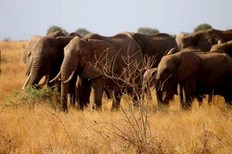 Tsavo East & Saltlick Safari Package