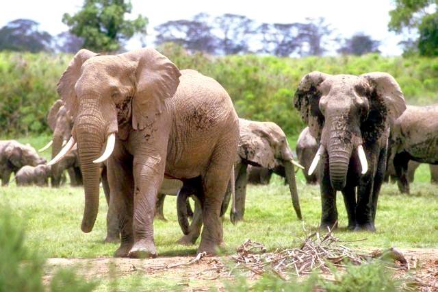 Tanzania Delight Tour