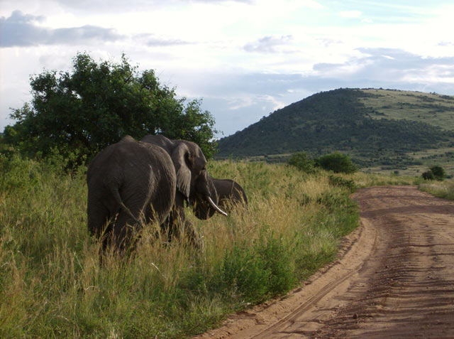 Annual Wildebeest Migration And Game Viewing Private Safari Tour