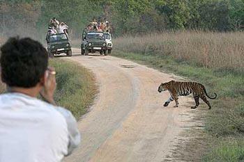 Wildlife Madhya Pradesh Tour