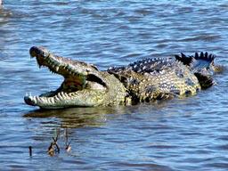 Wildlife Tour To Orissa (Odisha)