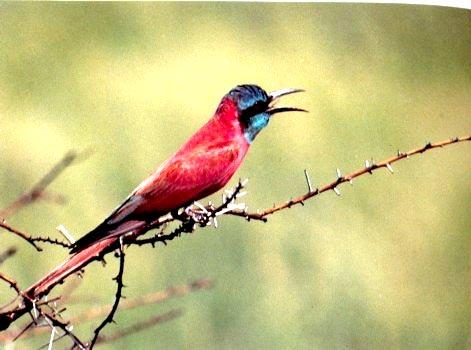 Bird Watching Tours - Sites I