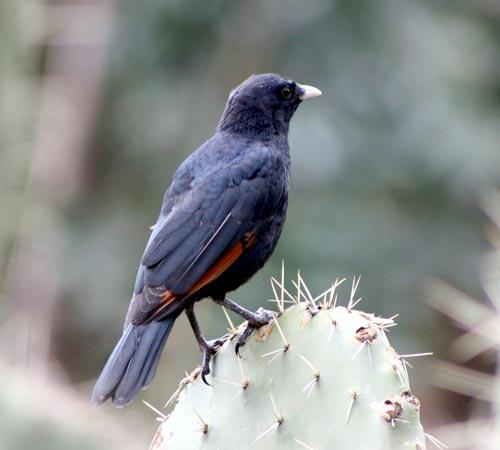 Bird Watching Tours - Sites II