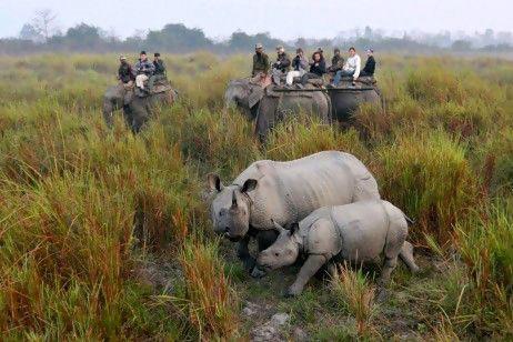 Assam Wildlife Tour 4 N /5 D
