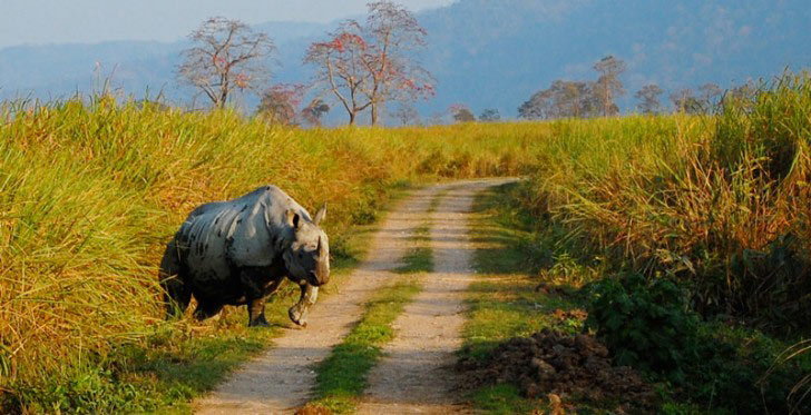 Best Of Wildlife Tour In Assam 7 N / 8D