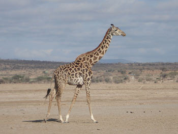 8 Days Best Of Kenya Adventure Safari