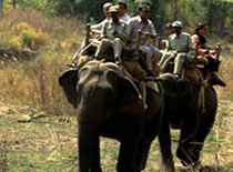 Wild India Tours