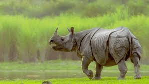 Kaziranga Safari Booking