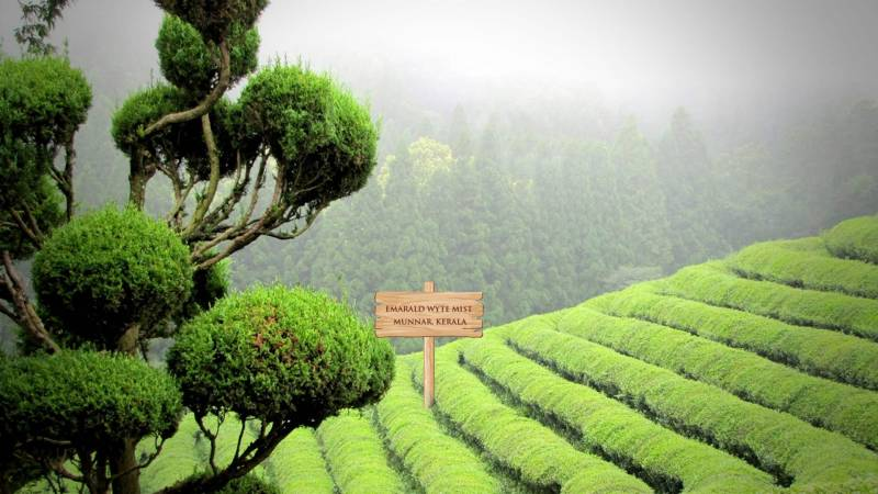 4 Days - Munnar & Thekkady Package
