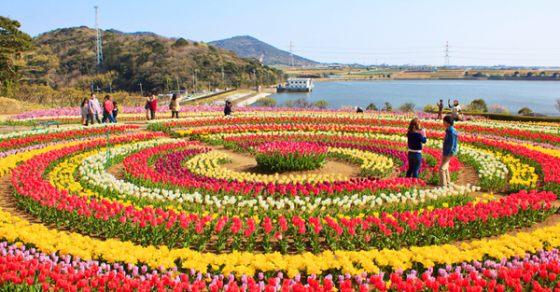 4 Nights 5 Days Tulip Festival Delight