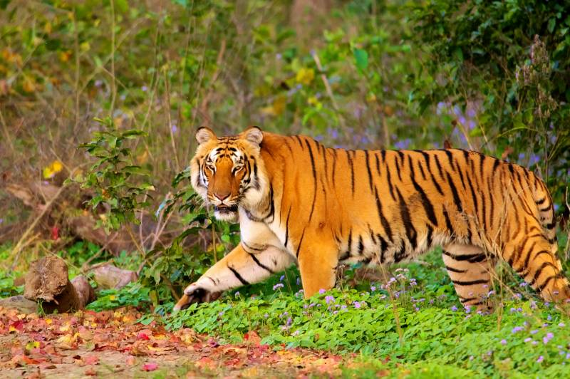 Jim Corbett Wildlife Tour Package From Delhi
