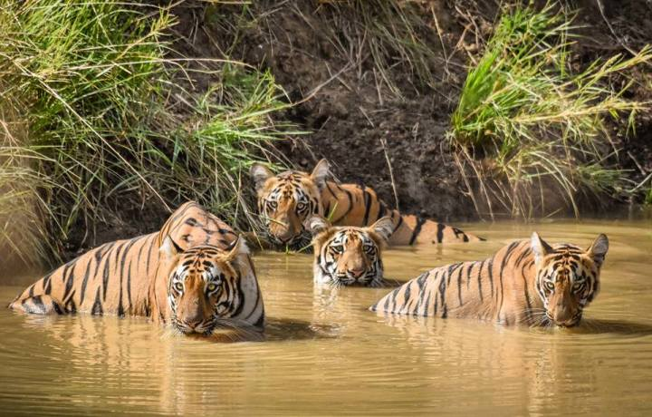 Tadoba Jungle Tour