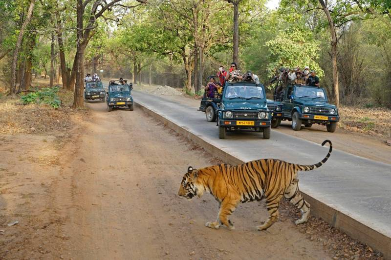 Tigers With Golden Triangle Tour