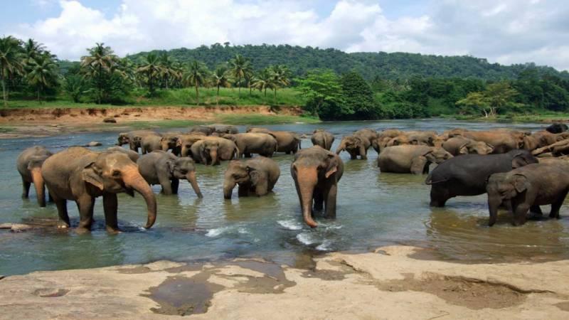 7 Days Sri Lanka Tour