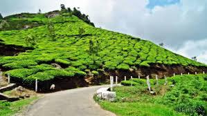 Cochin Munnar Thekkedy Alappuzha Kovalam Tour