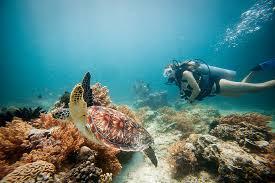 Snorkelling Trip Around Gili Islands Tour