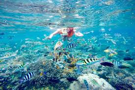 BALI With GILI T Tour 6 Days