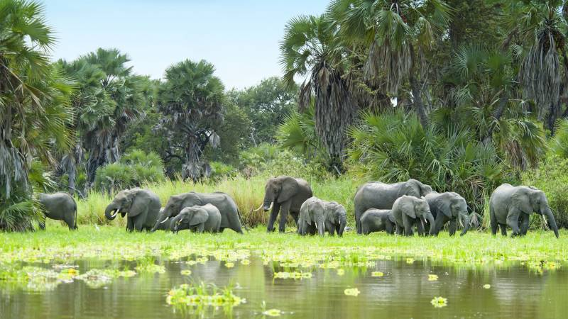 4days Selous Game Reserve Tour