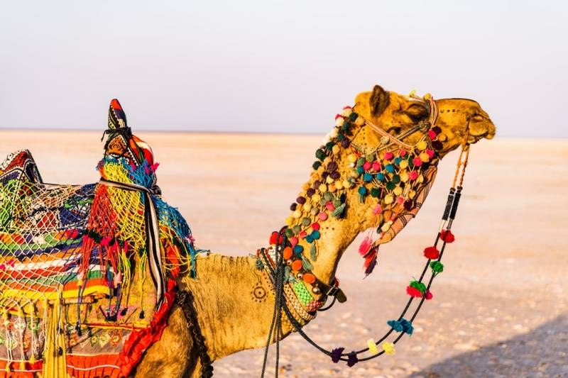 Rajasthan Whole Tour