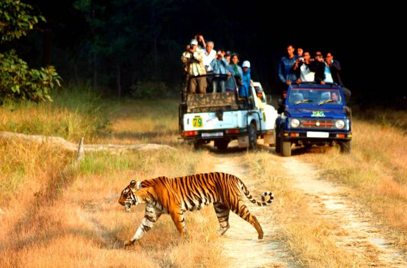 Nainital/ Corbett/ Ranikhet/ Kausani – 05 Night / 06 Days Tour