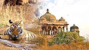 Rajasthan Wild Safari Tour