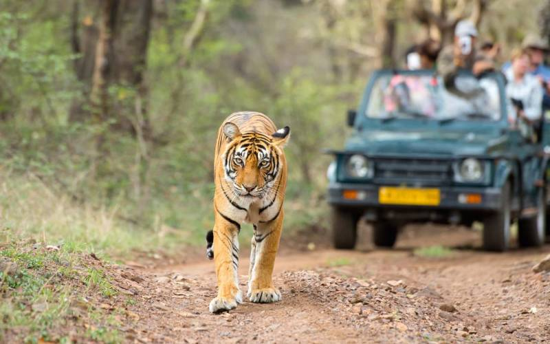 4N/5D (2 N Jaipur + 2 Night Ranthambore) Package