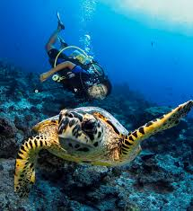 Maldives- 4Nights / 5 Days