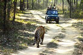 Madhya Pradesh Tiger Safari Tour