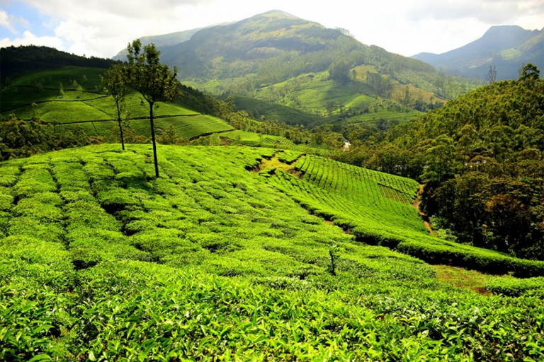 7 Days Kochi Athirapally Kanthaloor Munnar Tour