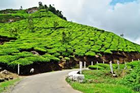 Short Break To Munnar Tour
