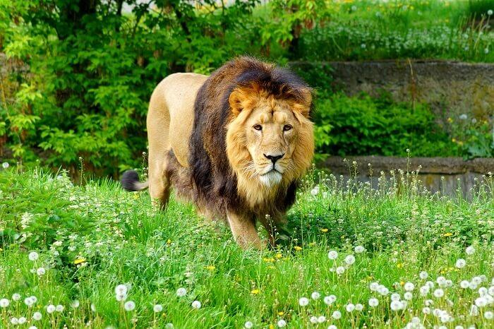 Gir National Park - Somnath Temple Package Duration - 3N/4D