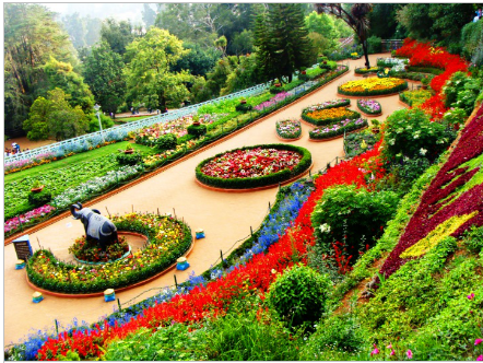 4N/3D Enchanting Ooty And Conoor Tour